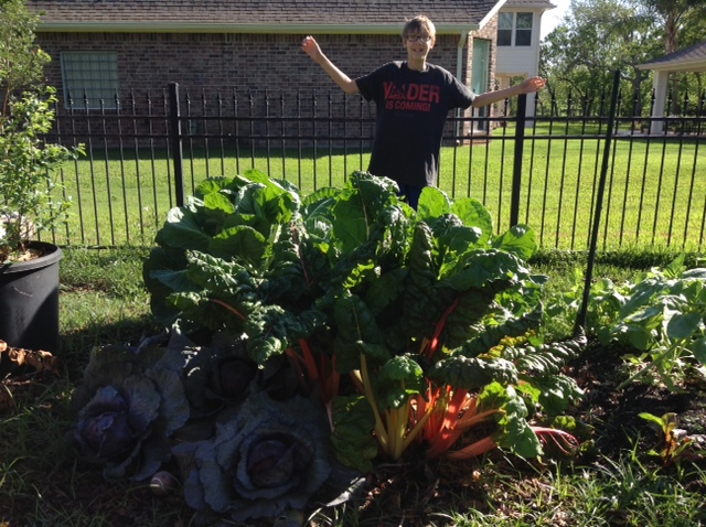 Tiny Garden, Giant Swiss Chard